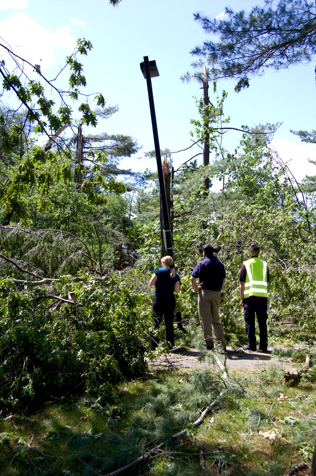 People inspecting damaged trees.